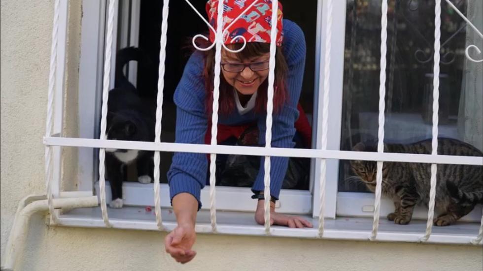 cat-ladder-lady-05
