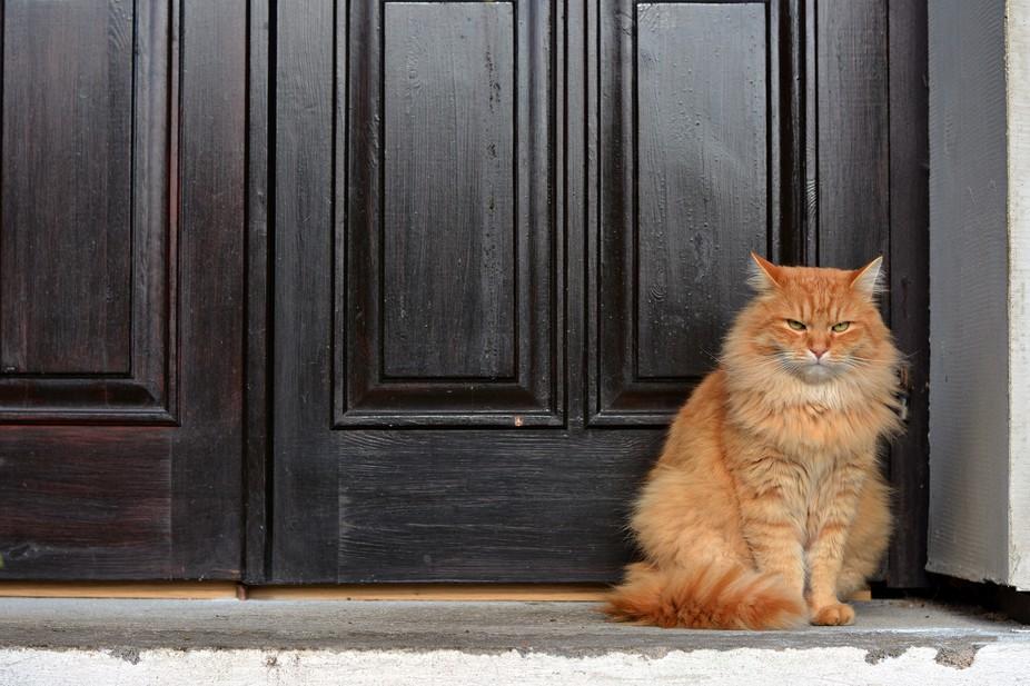 guard-cats-13