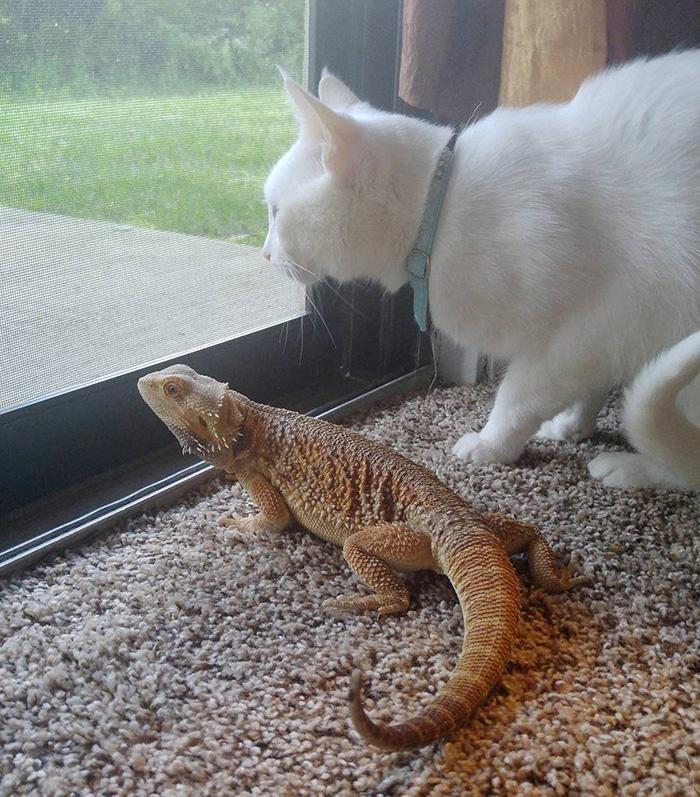 guard-cats-14