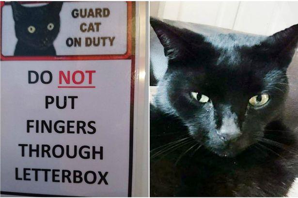 guard-cats-15