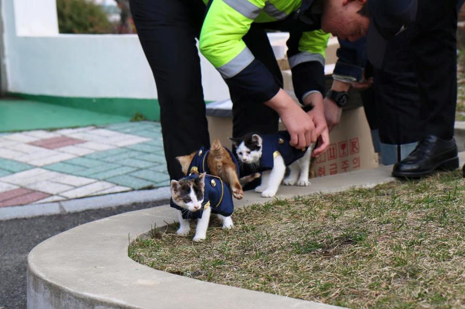 guard-cats-16