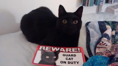 guard-cats-18