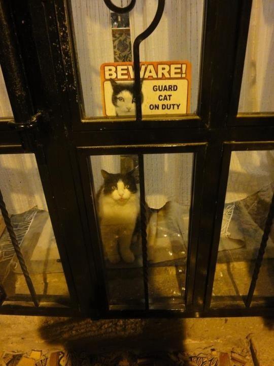 guard-cats-20