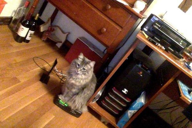 sitting-cat-15