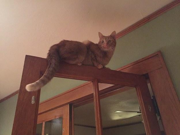 sitting-cat-17