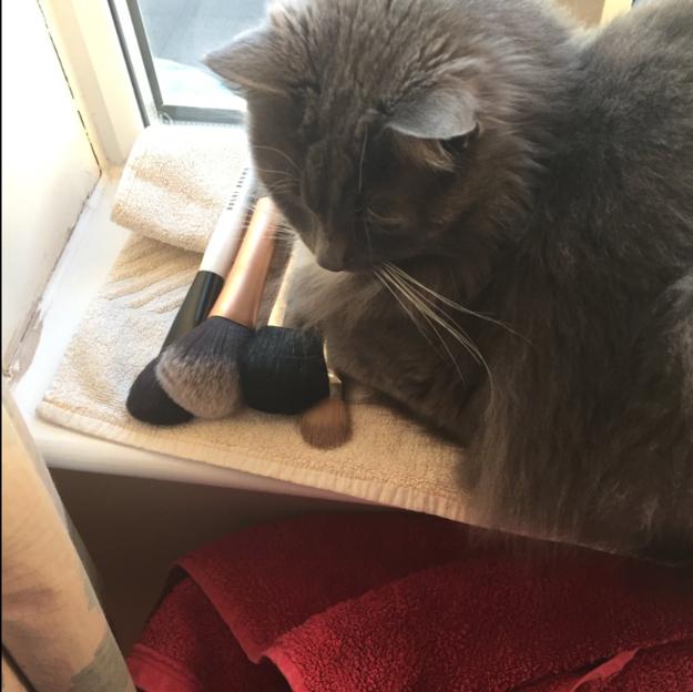 sitting-cat-19