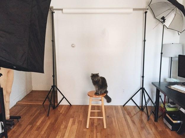 sitting-cat-22