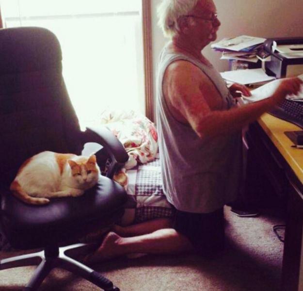 sitting-cat-23