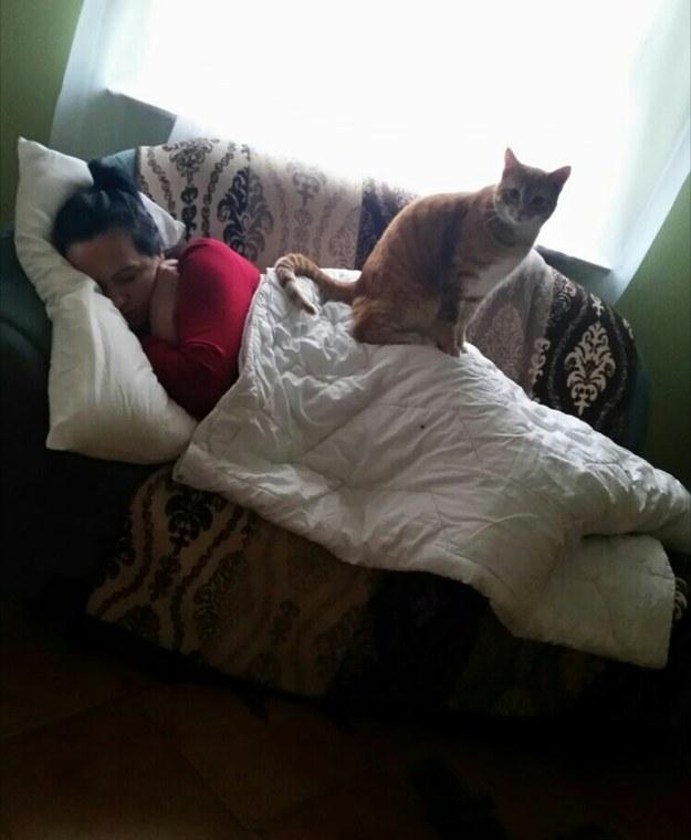sitting-cats-06