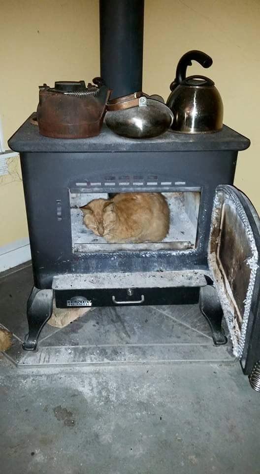 sitting-cats-12