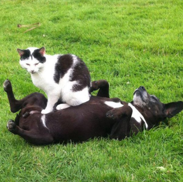 sitting-cats-13