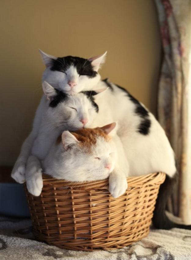 sitting-cats-14