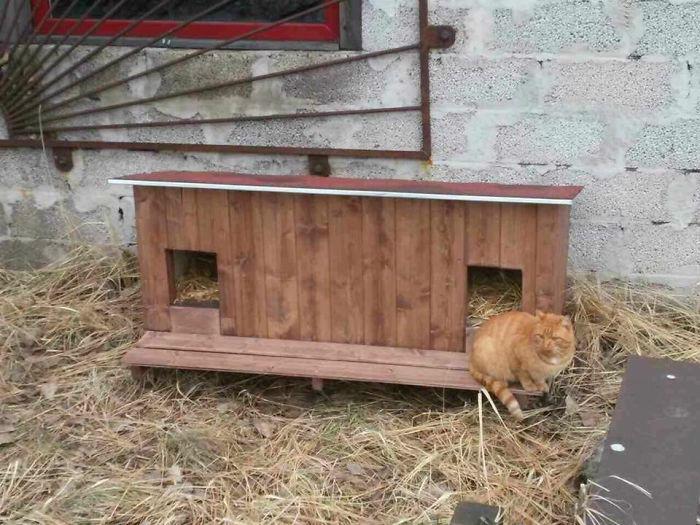 cat-tiny-homes-04