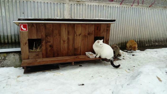 cat-tiny-homes-05