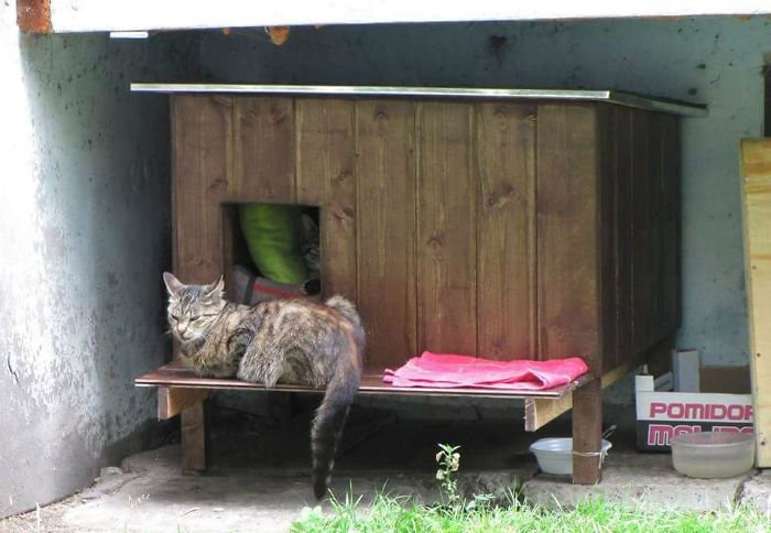 cat-tiny-homes-07
