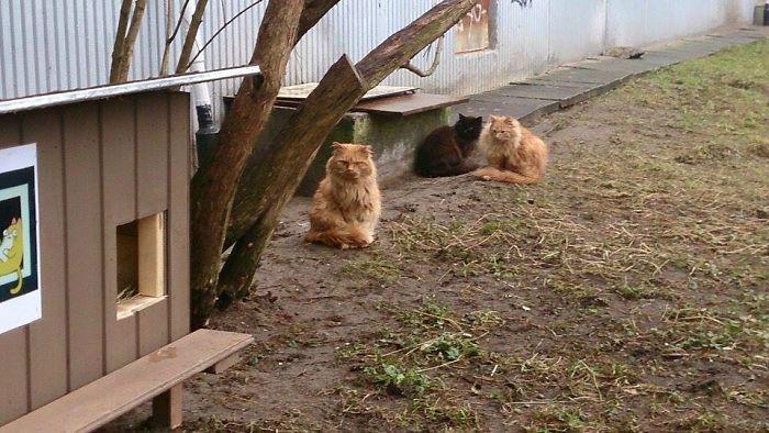 cat-tiny-homes-11