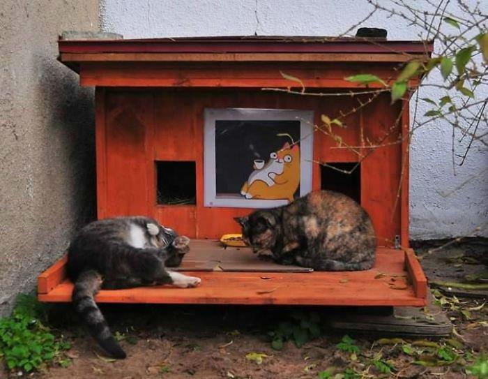 cat-tiny-homes-13