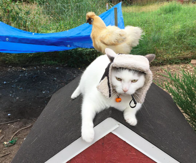 chick-cat-05