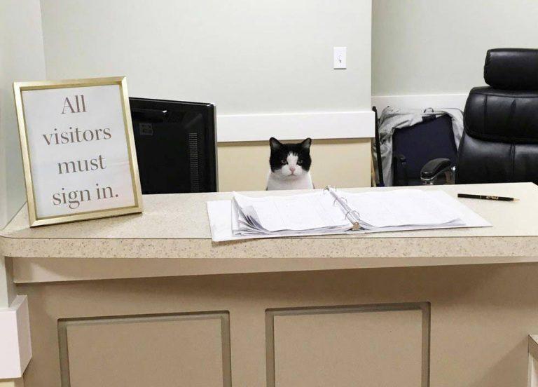 nursing-home-cat-01
