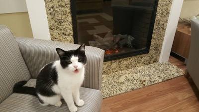 nursing-home-cat-02