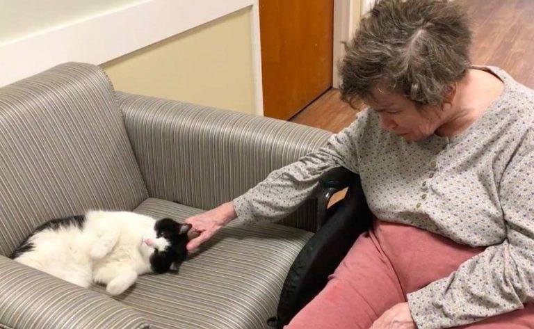 nursing-home-cat-05jpg