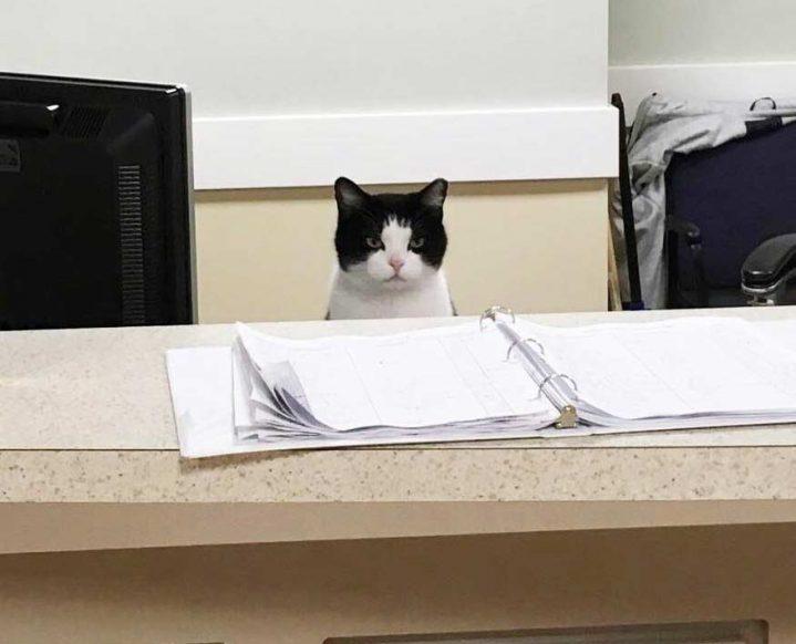 nursing-home-cat-07