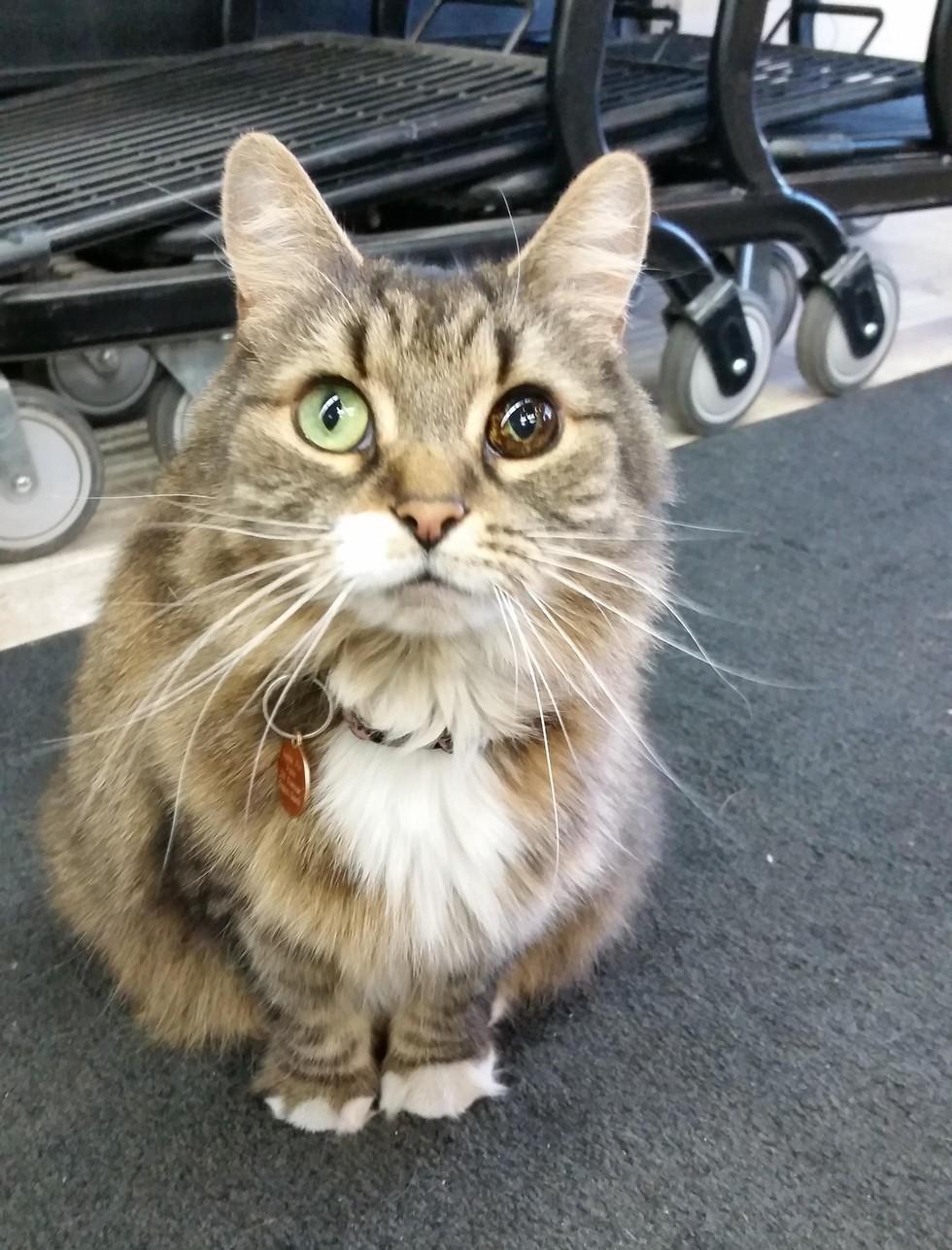 Stray-Cat-Unique-Eye-1