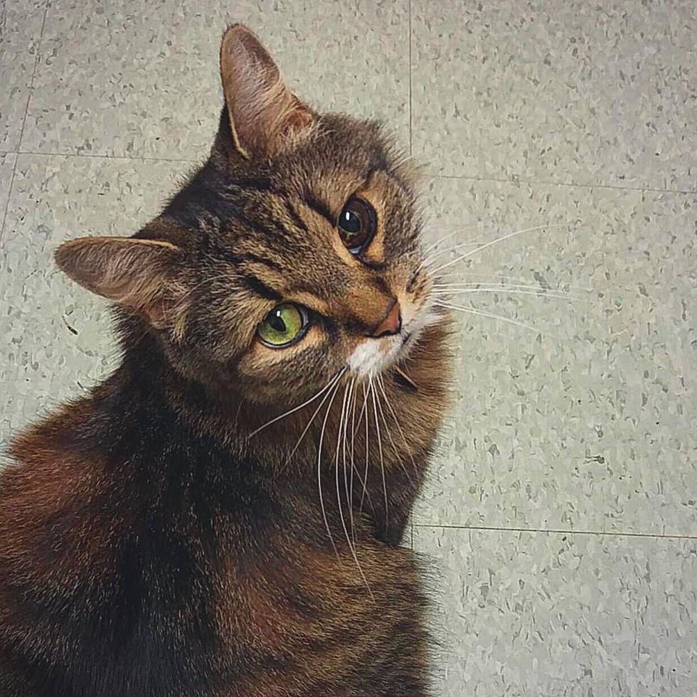 Stray-Cat-Unique-Eye-6