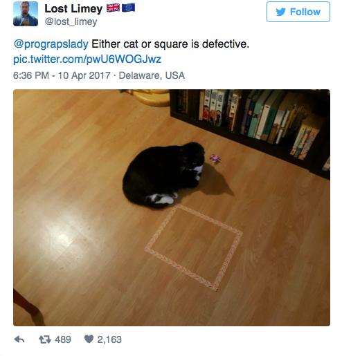 cat-square-08