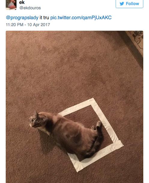 cat-square-10