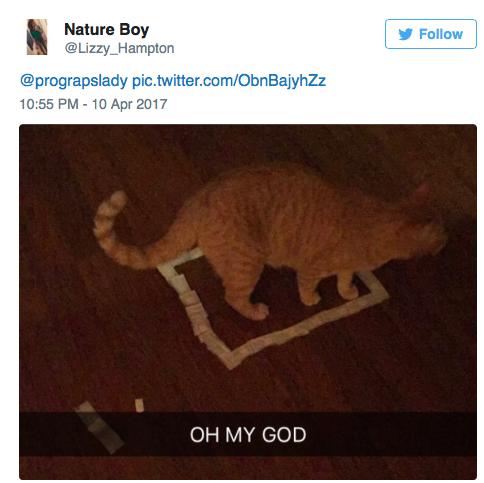 cat-square-11