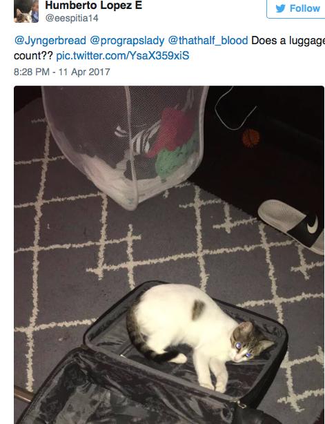 cat-square-13