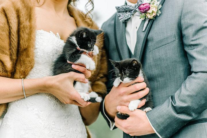 rescue-kitty-wedding-02