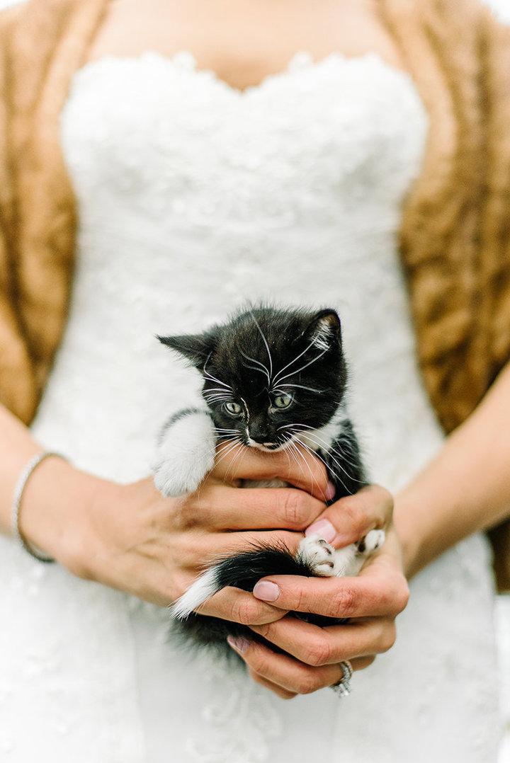rescue-kitty-wedding-03