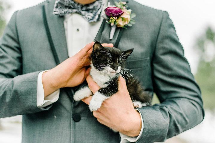 rescue-kitty-wedding-04