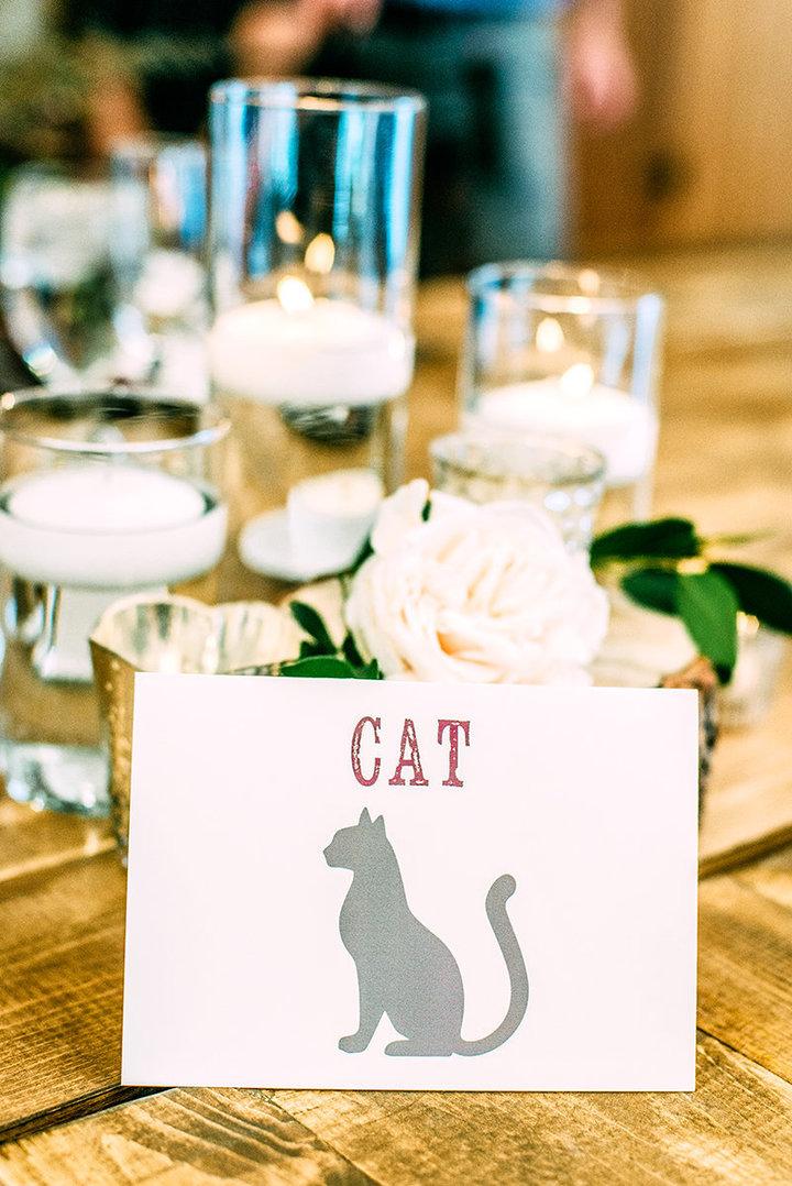 rescue-kitty-wedding-07