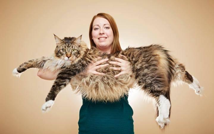 Biggest-house-cat-3
