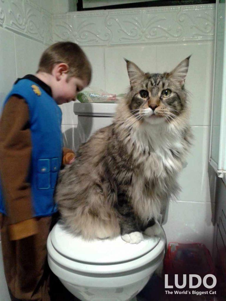 Biggest-house-cat-8