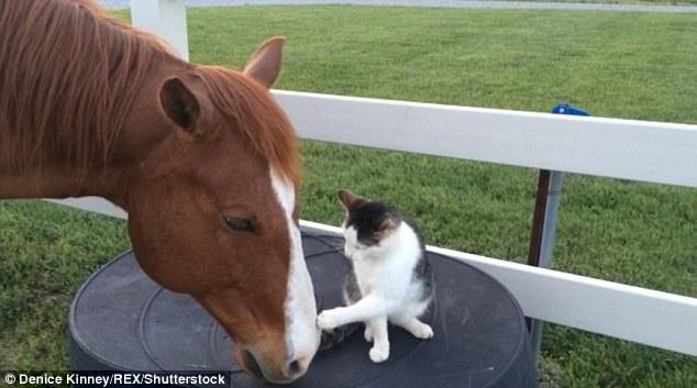 Dakota-Horse-Sappy-Cat-Bond-1