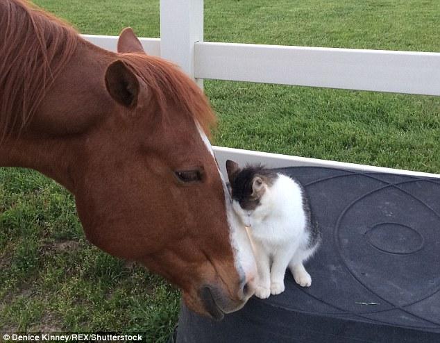 Dakota-Horse-Sappy-Cat-Bond-2
