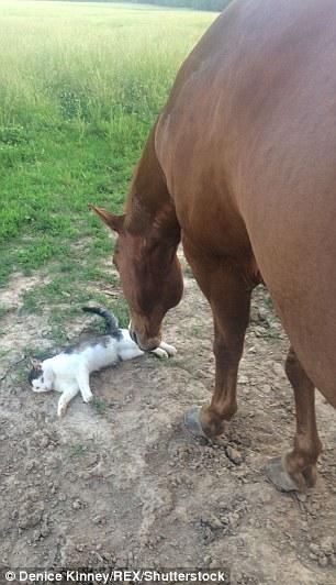 Dakota-Horse-Sappy-Cat-Bond-3