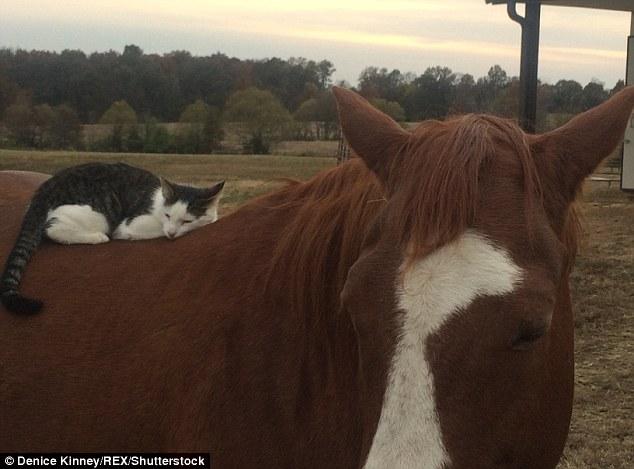 Dakota-Horse-Sappy-Cat-Bond-6