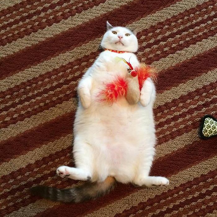 Scruffles-Fat-Cat-5
