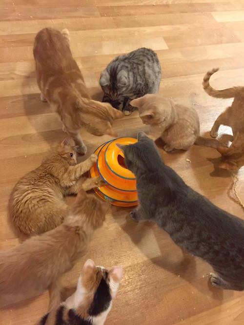 cat-museum-02
