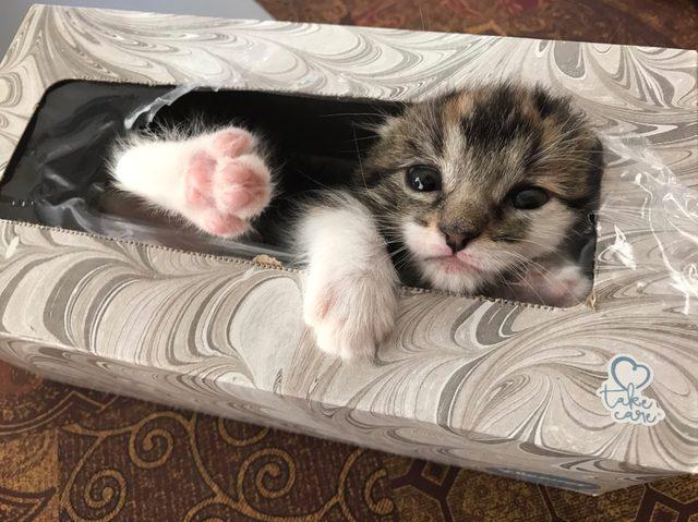 chanel-missing-kitten-kleenex-box-1