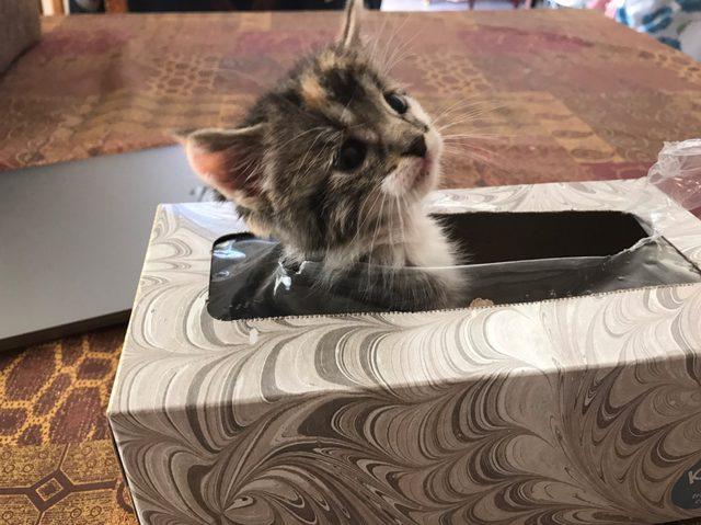 chanel-missing-kitten-kleenex-box-3