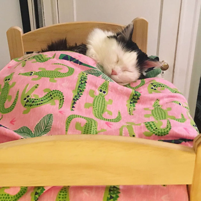 rescue-cat-sleeps-doll-bed-sophie-11