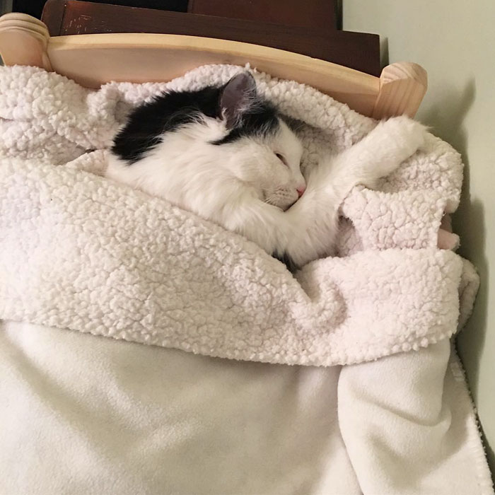 rescue-cat-sleeps-doll-bed-sophie-6