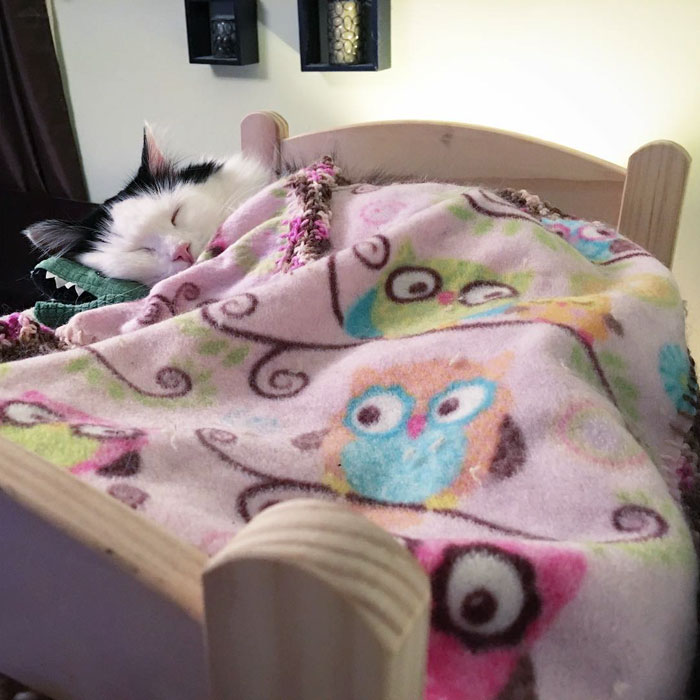 rescue-cat-sleeps-doll-bed-sophie-8