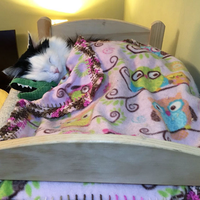 rescue-cat-sleeps-doll-bed-sophie-9